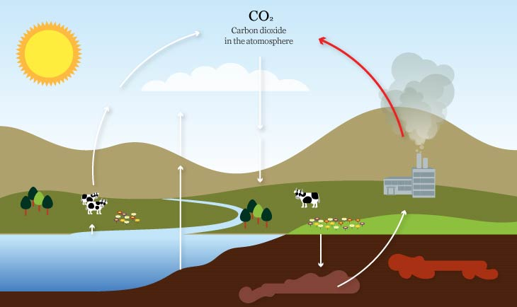 co2 cycle